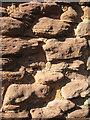 SO5429 : Local red sandstone : Week 40