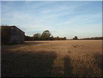 TF2002 : Wheat Field by Ajay Tegala