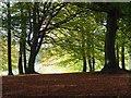 SU7685 : Rowe Wood, Fawley by Andrew Smith
