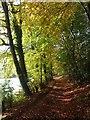 SU7891 : Bridleway, Hanger Wood, Fingest by Andrew Smith