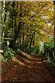 SO8001 : Beech trees, Woodchester Park : Week 45