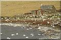 HP5605 : Gulls at the Westing : Week 46