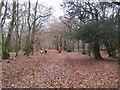 SU9585 : Burnham Beeches: McAuliffe Drive by Nigel Cox