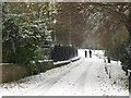 TA1828 : Ivy Lane, Hedon in the Winter : Week 47