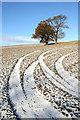 NT5729 : Tracks and trees : Week 47