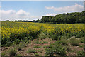 TL6756 : Footpath through oil seed rape by Hugh Venables