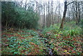 TQ5942 : Small stream, Barnett's Wood by Nigel Chadwick