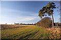 TL6957 : New plantation near Kirtling by Bob Jones