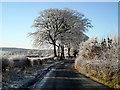 NS6151 : Shields Road on a Frosty Morning : Week 48