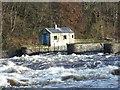 C8530 : River Bann near Coleraine 2 : Week 50