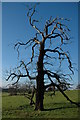 SO8954 : Tree near Cudleigh Court Farm, Spetchley : Week 50
