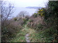 SX2754 : Coast path above Bodigga Cliff by Richard Law