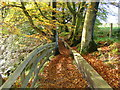 NS6551 : Calderglen Country Park, East Kilbride by Dannie Calder