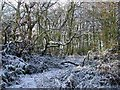 SP1393 : Jones's Wood in winter by ROWLAND TURNER