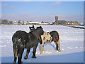 SE1835 : Ponies in the snow by John Illingworth