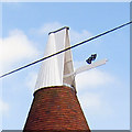TQ5530 : Cowl of Little Oast House by Oast House Archive