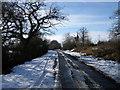 TL1191 : Towards Morborne cross roads by Michael Trolove