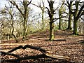 SP9713 : Bronze Age Barrow, Moneybury Hill by Chris Reynolds