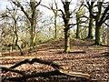 SP9713 : Bronze Age Barrow, Moneybury Hill by Chris Reynolds