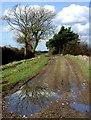 TA1037 : Common Lane, Wawne : Week 9