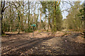SU3916 : Bridleway junction in Lord's Wood by Peter Facey