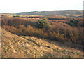 SS8676 : Concentrations of birch at Merthyr Mawr Warren by eswales