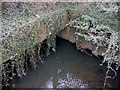 SP0177 : River Rea Culvert  Exit , Tessall Lane Bridge. by Roy Hughes