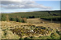 NS5211 : Sheepfold & firebreak west of the Beoch Lane by Leslie Barrie