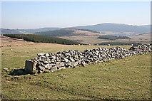 NJ4037 : Old Field Wall above Greens of Glenbeg by Anne Burgess