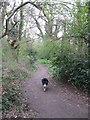 TQ1255 : A Path through the Woodland on Bookham Common by Chris Reynolds