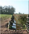 SJ6051 : Drainage channel near Baddiley by Espresso Addict