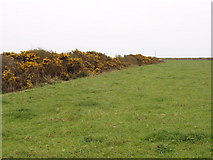 S9804 : Pasture with gorse hedge near Brandy cross roads by David Hawgood
