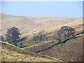 SN7453 : Nant Coli by Cwm Doethie Fawr, Ceredigion by Roger  Kidd