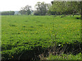 SJ7264 : Field at Briarpool, with dandelions by Stephen Craven