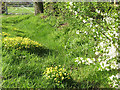 SJ7162 : Roadside spring flowers by Stephen Craven