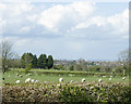 ST6266 : 2009 : Sheep meadows off Highwall Lane. by Maurice Pullin