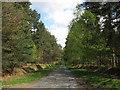 SU8966 : Swinley Park Road by don cload