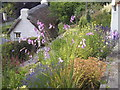 SX3057 : Thatched cottage by STEVE POVEY