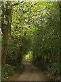 SW7944 : Road at Newbridge by Derek Harper