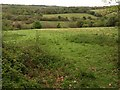 SW7943 : Valley near Newbridge by Derek Harper