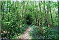 TQ6038 : Bluebells by the footpath through High Wood (2) by N Chadwick
