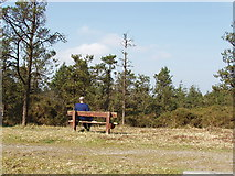 S9618 : Bench in the pines on Forth Mountain by David Hawgood