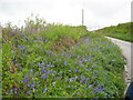 SX1960 : Cornish roadside late spring flowers by Dr Duncan Pepper