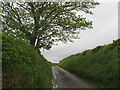 SX1760 : A typical sunken Cornish lane by Dr Duncan Pepper