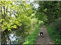 SP8810 : Wendover Arm: The canal overshadowed by trees by Chris Reynolds