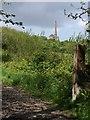 SW7343 : Emerging from Unity Wood by Derek Harper