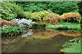 SO6103 : Ornamental Pond Lydney Park Gardens : Week 20