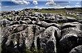NY6410 : Wide Angle Shot Of A Limestone Pavement : Week 21