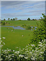 SJ6544 : Pasture and pools at Audlem, Cheshire by Roger  Kidd