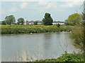 SK5535 : River Trent at Clifton by Alan Murray-Rust